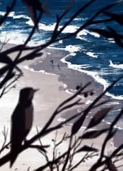 coastline by katcrunch