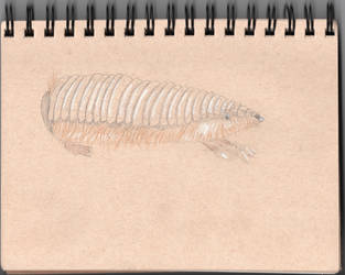 Animal Challenge Week 4: Fairy Armadillo by TheyCallMeSage