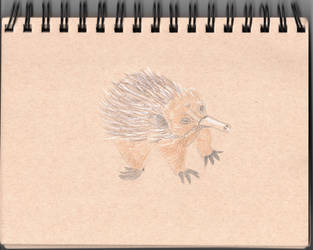 Animal Challenge Week 6: Echidna by TheyCallMeSage