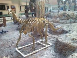 Bellusaurus by Fafnirx