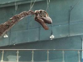 Mamenchisaurus head by Fafnirx