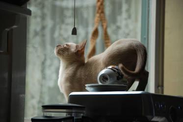 Chanel, bird spotting by kayandjay100