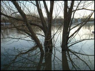 Trees In the Water by heystranger