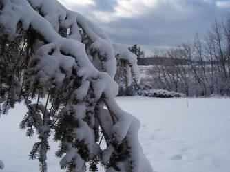 Snow by heystranger