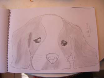 Cute Sad Dog by Krisa20030920