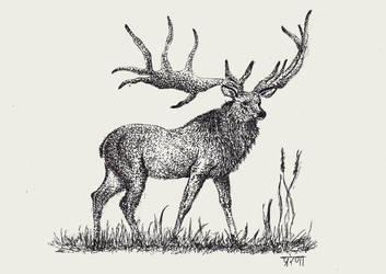 Deer by katyazaharov