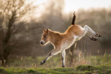 Prancing pony by AlesGola