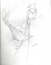 SketchBook9 Birds by Mystikkat