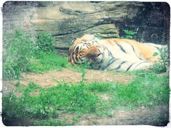 Sleepy Tiger by 800-a-1b3