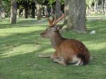 Deer Stock 1 by DarkMoon17