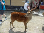 Deer Stock 3 by DarkMoon17