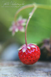 Strawberry by Estelle-Photographie