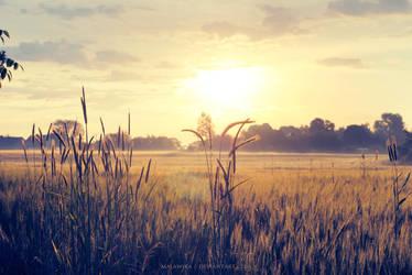 Sunrise by malawika