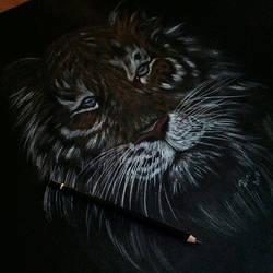In Tigers we trust. by nightwish5871