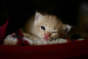 Winking Kitty by DreamEyce