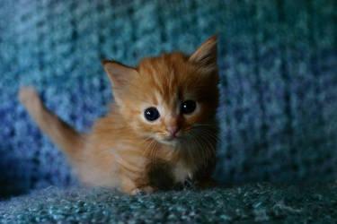 Furby Kitten by DreamEyce