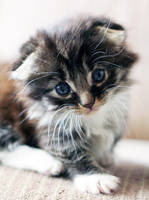 Too much cute...  Ropey by DreamEyce