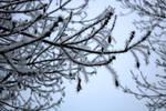 Beautiful winter by martinatera