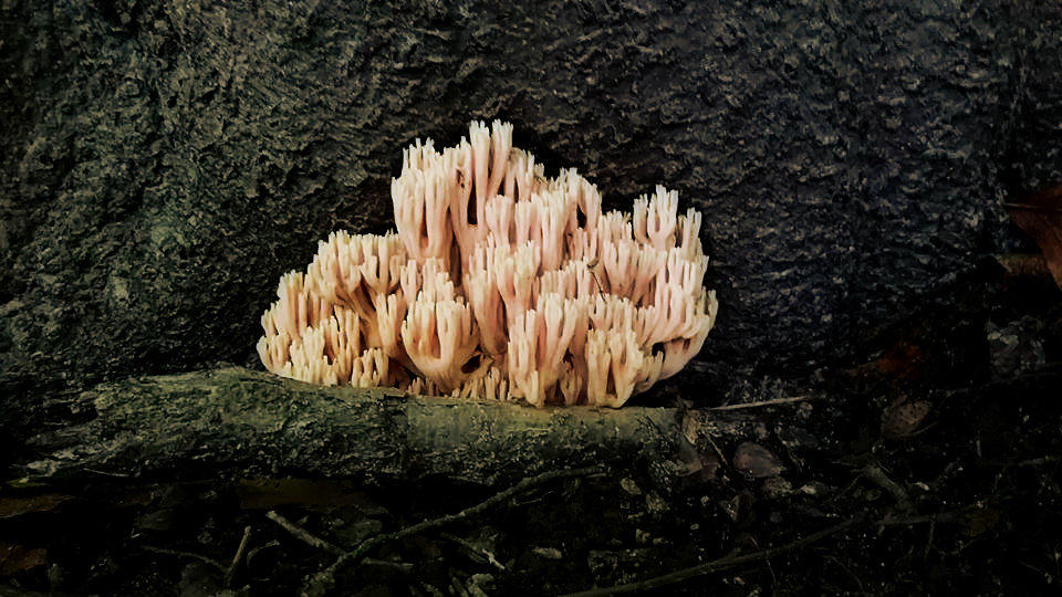 weird fungi by Foreigner227