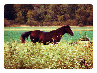 horse in the flowers by Foreigner227