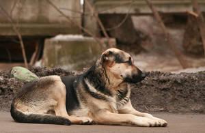 Stray dog by PaPeRDoLLLL