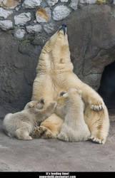 Polar Bears .1 by PaPeRDoLLLL