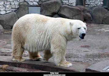 Polar bear .1 by PaPeRDoLLLL