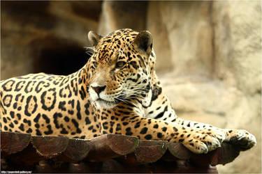 Jaguar .2406 by PaPeRDoLLLL
