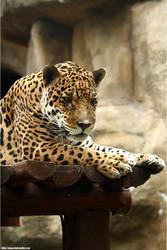 Jaguar .24062 by PaPeRDoLLLL