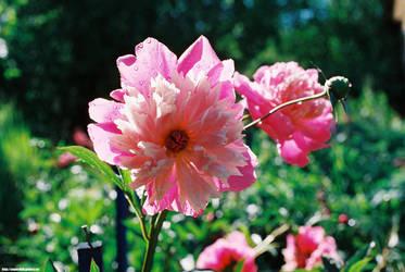 Flower by PaPeRDoLLLL