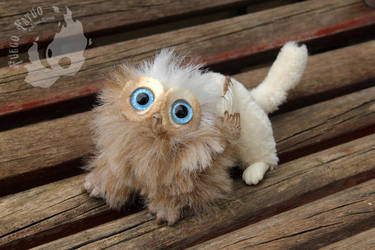 Domestic gryphon kitten (for sale) by AlvaroFuegoFatuo