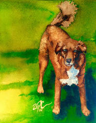 Red Dog by OdderByArt