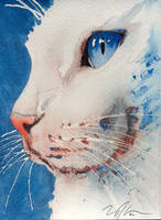 golly, another white cat... by OdderByArt