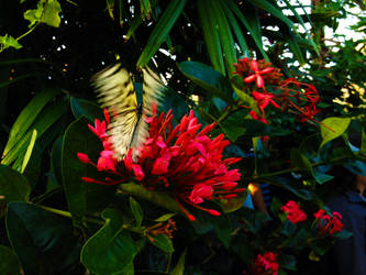 blurred wings by tolva
