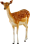 Deer icon.3