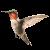 Hummingbird icon.2
