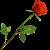 Rose icon.6