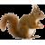 Squirrel icon.13