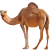 Camel icon.2