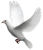 Dove-Bird icon.5