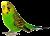 Parakeet-Bird icon