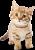 Kitten icon.3
