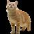 Cat icon.4