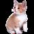 Kitten icon.5
