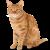 Cat icon.5