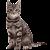 Cat icon.6