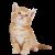 Kitten icon.11