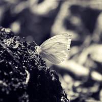 Butterfly II by iilva