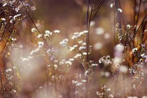 Blossoms among weeds by iilva