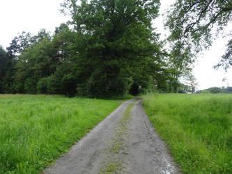 Path by sott2624